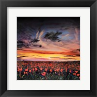 Framed Sunset lit Poppy Field