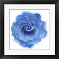 Framed Blue Rose