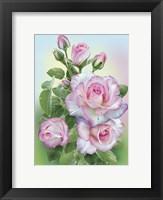 Framed Morning Roses