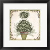 Framed Topiary I