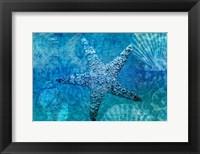 Framed White Starfish