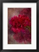 Framed Tapestry Rose