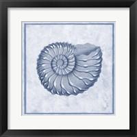 Framed Blue Nautilus C