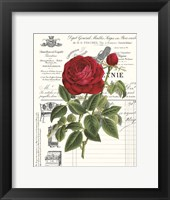 Framed Heirloom Roses B