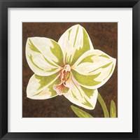 Framed Surabaya Orchid Petites B