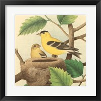 Framed Goldfinch & Warbler A
