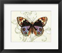 Framed Butterfly Theme I