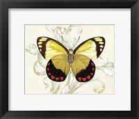 Framed Butterfly Theme II