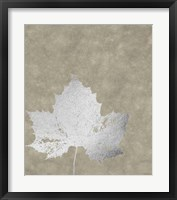 Framed Silver Foil Leaf II on Lichen Wash
