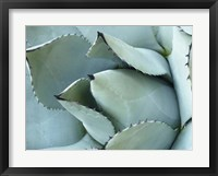 Framed Agave Detail I