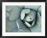 Framed Agave Detail II