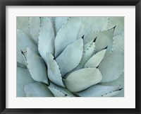Framed Agave Detail IV