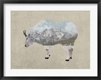 Framed Rocky Mountain Goat
