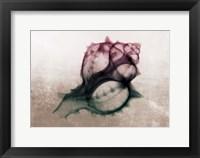 Framed Ombre Sea Shell X-Ray