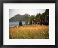 Framed Grassy Field 1