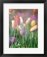Framed Tulip Swim B