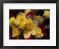Framed Roses 4