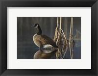 Framed Greet the Sun - Canada Goose