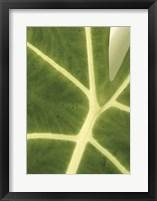 Framed Tropical Veins