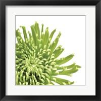 Framed Green Bloom 3 (detail)