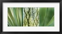 Framed Jade Gardens