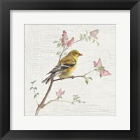 Framed Female Goldfinch Vintage