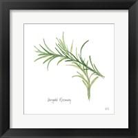 Framed Variegated Rosemary