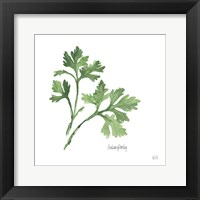 Framed Italian Parsley