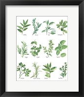 Framed Herb Chart