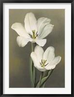 Framed Tulipani