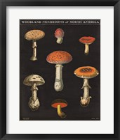 Framed Mushroom Chart III
