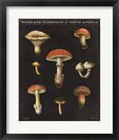 Framed Mushroom Chart II