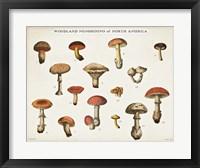 Framed Mushroom Chart I light