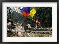 Framed Mule train on trail to Namche Bazaar, Larja Bridge, Khumbu, Nepal