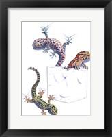 Framed Three Lizards