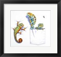 Framed Three Chameleons