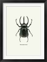 Framed Beetle Black