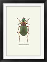 Framed Beetle Green