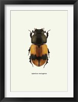 Framed Beetle Orange