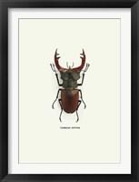 Framed Beetle Red