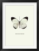 Framed White Butterfly