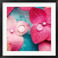 Framed Pink Flowers 3