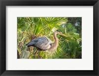 Framed Great Blue Heron at Gatorland