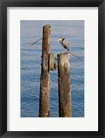 Framed Great Blue Heron bird, Elliott Bay