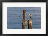 Framed WA, Seattle, Great Blue Heron bird, Elliott Bay