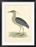 Framed Vintage Night Heron