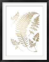 Gold Foil Ferns IV Framed Print