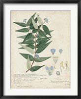Framed Delicate Blue Descubes II