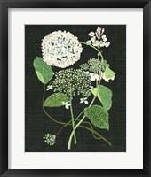 Framed White Hydrangea Study I