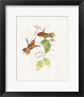 Framed Colorful Hummingbirds II